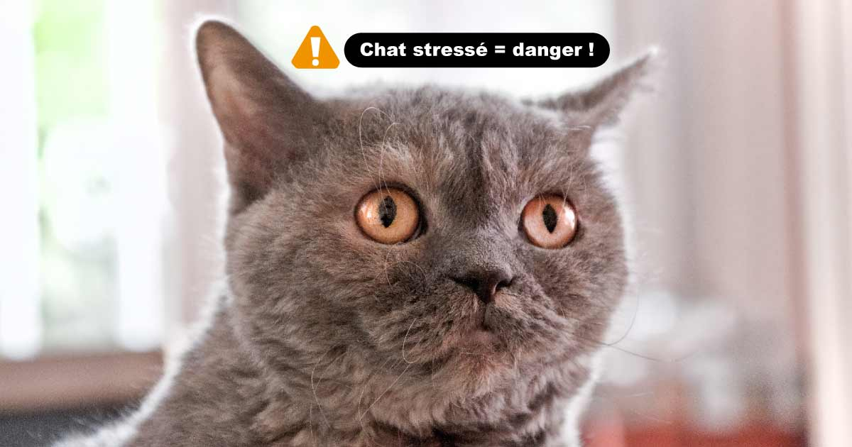 ATTENTION : chat stressé = chat en danger !