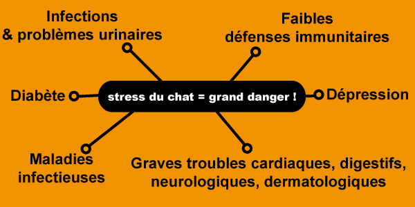 Risques du stress sur le chat