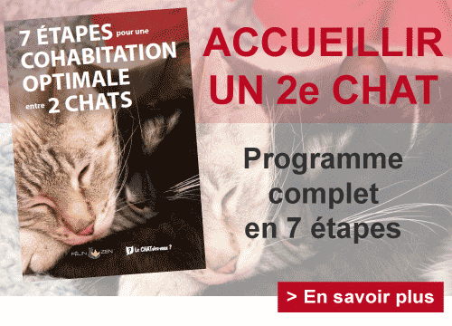 Adopter un deuxieme chat
