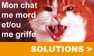 Solutions chat agressif